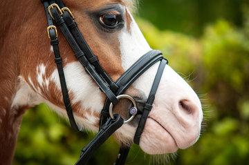 Mors Pony