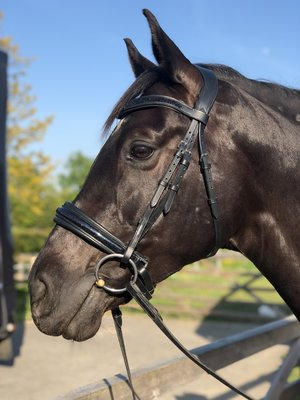 Shine bridon Noir Bridle & Ride