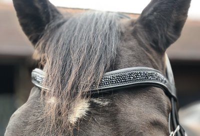 Shine Frontal Zwart Bridle & Ride