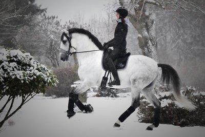Equibridle Snow Grey