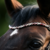 Furstentanz : Magic Tack Frontal detail