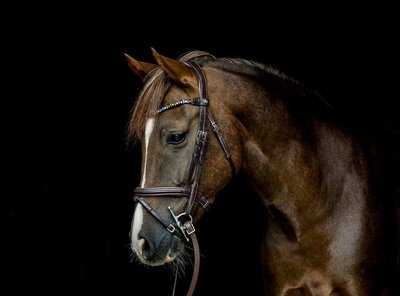 Rocky's Autumn Vibes : Magic Tack Frontal detail